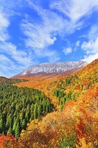 秋の鍵掛峠より大山と紅葉の写真素材 [FYI04740597]