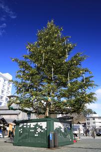 草津温泉湯畑のクリスマスツリーの写真素材 [FYI04740616]