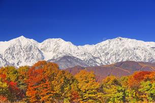 野平から望む白馬連峰と月と紅葉の樹林の写真素材 [FYI04740673]