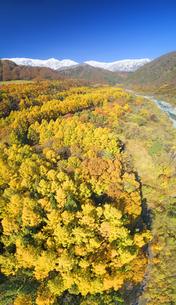 白馬大橋付近から望む白馬連峰と紅葉のカラマツ林の写真素材 [FYI04740674]