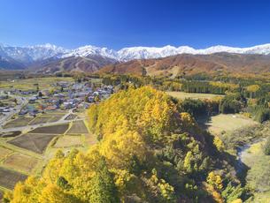 信濃森上から望む白馬連峰と紅葉の樹林の写真素材 [FYI04740683]