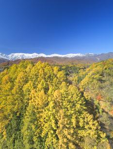 信濃森上から望む白馬連峰と紅葉のカラマツ林の写真素材 [FYI04740684]