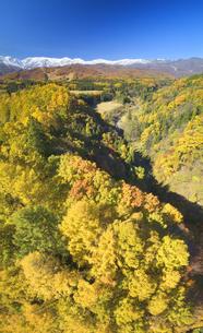 信濃森上から望む白馬連峰と紅葉の樹林の写真素材 [FYI04740686]