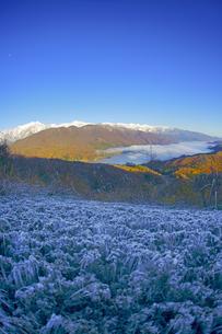権現山から望む朝の北アルプスと青木湖と霜柱の写真素材 [FYI04740704]