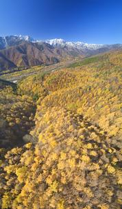 小熊山から望む仁科三山と紅葉のカラマツ林と鹿島川の渓谷の写真素材 [FYI04740708]
