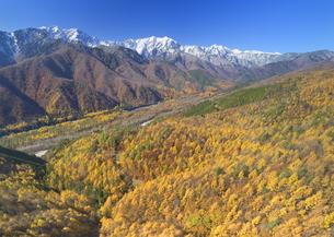 小熊山から望む仁科三山と紅葉のカラマツ林と鹿島川の渓谷の写真素材 [FYI04740709]