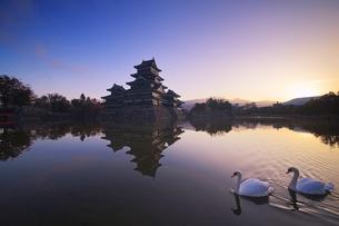 朝の松本城と白鳥の夫婦の写真素材 [FYI04740721]