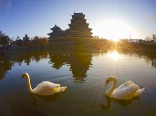 朝の松本城と白鳥の夫婦の写真素材 [FYI04740726]