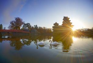 朝の松本城と白鳥の夫婦の写真素材 [FYI04740729]