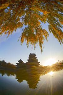 松本城と朝日とヤナギの紅葉の写真素材 [FYI04740731]