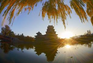 松本城と朝日とヤナギの紅葉の写真素材 [FYI04740732]