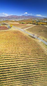 椀子ワイナリーのワインぶどうの紅葉と浅間山と烏帽子岳の写真素材 [FYI04740792]