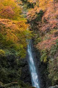 養老の滝と紅葉の写真素材 [FYI04740946]
