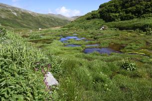 白雲岳避難小屋周辺の湿原(北海道・大雪山)の写真素材 [FYI04741034]
