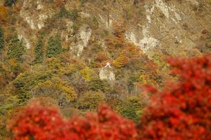 妙義山の紅葉の写真素材 [FYI04741211]