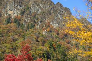 妙義山の紅葉の写真素材 [FYI04741214]