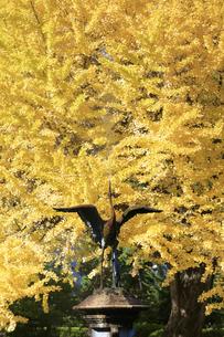 日比谷公園の紅葉の写真素材 [FYI04741218]