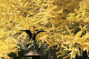 日比谷公園の紅葉の写真素材 [FYI04741220]