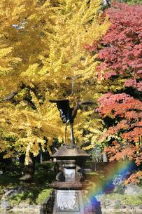 日比谷公園の紅葉の写真素材 [FYI04741221]