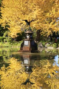 日比谷公園の紅葉の写真素材 [FYI04741222]