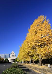 イチョウ並木と国会議事堂の写真素材 [FYI04741223]