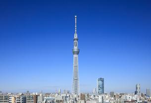 錦糸町より望む東京スカイツリーの写真素材 [FYI04741231]