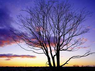 冬の朝の写真素材 [FYI04741420]