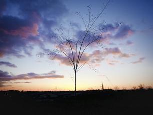 冬の朝の写真素材 [FYI04741421]