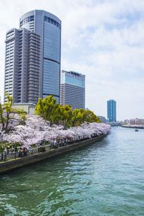 大川沿いの満開の桜の写真素材 [FYI04741458]