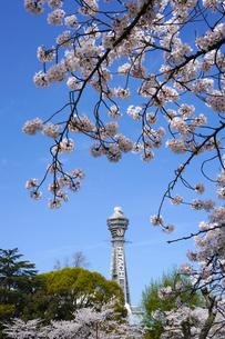 桜となにわのシンボル通天閣の写真素材 [FYI04741460]
