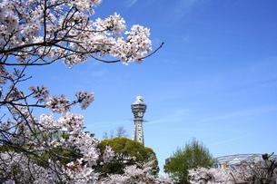 桜となにわのシンボル通天閣の写真素材 [FYI04741461]