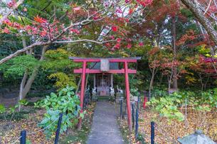名刹を彩る紅葉の本土寺の写真素材 [FYI04741745]