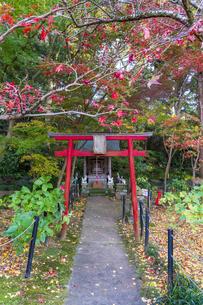 名刹を彩る紅葉の本土寺の写真素材 [FYI04741746]