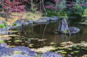 名刹を彩る紅葉の本土寺の写真素材 [FYI04741760]