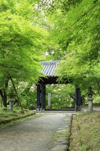 新緑の秋月城跡 黒門の写真素材 [FYI04741825]