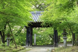新緑の秋月城跡 黒門の写真素材 [FYI04741826]