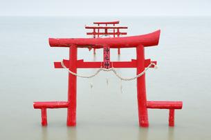 大魚神社の海中鳥居の写真素材 [FYI04741982]