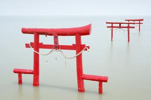大魚神社の海中鳥居の写真素材 [FYI04741983]