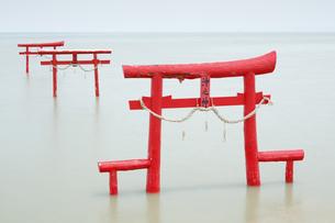 大魚神社の海中鳥居の写真素材 [FYI04741984]