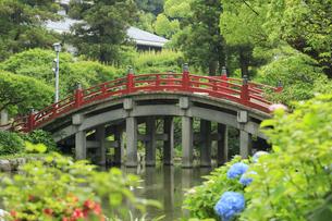 太宰府天満宮の太鼓橋の写真素材 [FYI04741994]