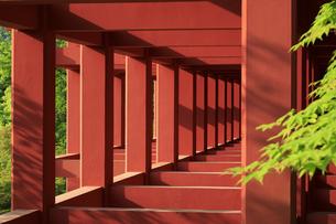 祐徳稲荷神社の柱の写真素材 [FYI04742015]