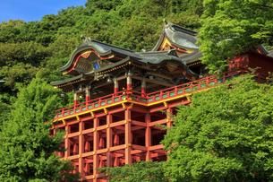 新緑の祐徳稲荷神社の写真素材 [FYI04742019]