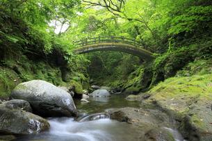 新緑の天安河原の太鼓橋の写真素材 [FYI04742055]