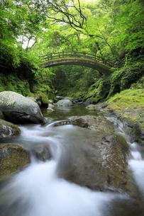 新緑の天安河原の太鼓橋の写真素材 [FYI04742056]