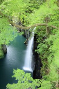 高千穂峡の真名井の滝の写真素材 [FYI04742067]