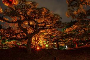 【香川県 高松市】秋の夜間ライトアップの栗林公園 日本庭園の写真素材 [FYI04742198]