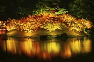 【香川県 高松市】秋の夜間ライトアップの栗林公園 日本庭園の写真素材 [FYI04742199]