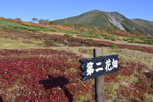 秋の緑岳第二花園(北海道・大雪山)の写真素材 [FYI04742344]