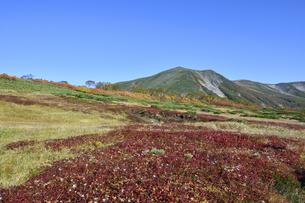 秋の緑岳第二花園(北海道・大雪山)の写真素材 [FYI04742345]