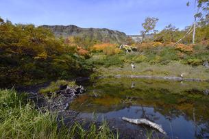 秋の大雪高原沼(北海道・大雪山)の写真素材 [FYI04742369]